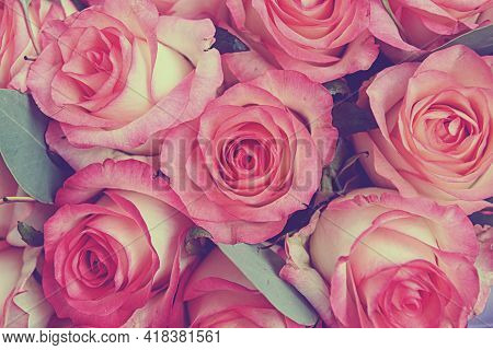 Rose Background. Colorful Pink Rose Bouquet Background