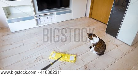 Microfiber Yellow Mop Isolated On White Wooden Floor Background, Closeup, Indoors. The Cat Plays Fun