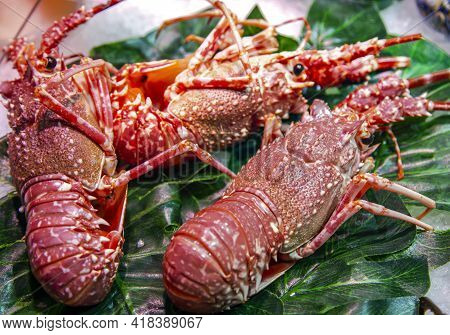 Group Of Fresh Lobsters Lying On Green Leaves For Sale At The Boqueria Market, Barcelona, Spain. Sea
