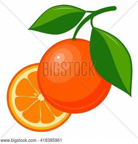 Drawn Ripe Orange Fruit. Ripe Orange With Leaf Isolated On White Background. Whole And Cut Orange. V
