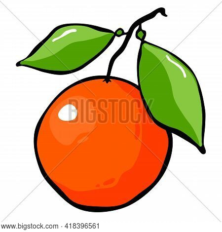 Drawn Orange On A Branch With Leaves. Fruit On A White Background. Vector Illustration.