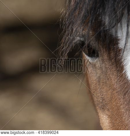 Beautiful Close Up Of Horse's Eye With Long Mane