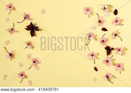 Spring Background With Fresh Flower On Yellow Background.