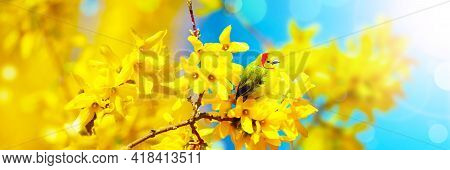 Great Tit Sitting On A Tree Branch In Spring Weather