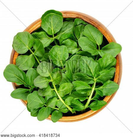 Watercress Leaves In A Wooden Bowl. Fresh Yellowcress, Nasturtium Officinale. Leaf Vegetable With Pi