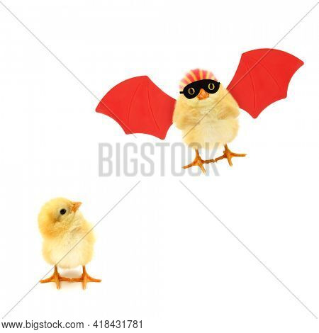 Two chicks one looking in other crazy chick superhero flying up with red wings trendy concept isolated on white background funny photo