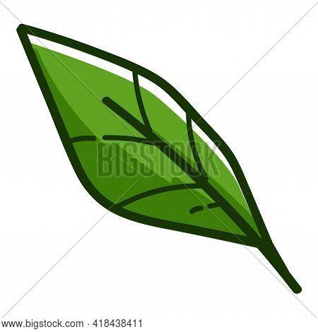 Green Leaf Foliage Tropical Flora Ecology Greenery
