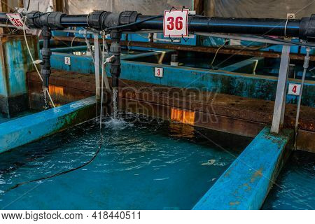 Water Filling Storage Tanks For Live Seafood Caught By Fishermen At Industrial Fishing Port.
