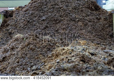 Pile Of Raw Horse Manure In The Yard. Close-up Of Pile Of Manure In The Countryside. Detail Of Heap