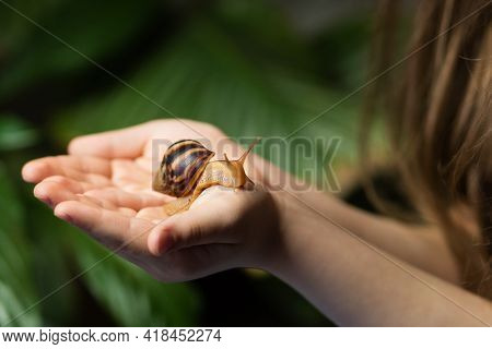 Achatina Snail Is Crawling On Palms Of Little Girl. Concept Of Exploring Wildlife And Getting To Kno