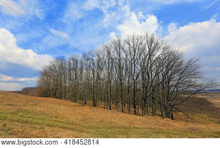 grove on a slope in early spring under a blue sky with clouds