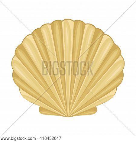 Scallop As Saltwater Clams Or Marine Bivalve Mollusk Vector Illustration