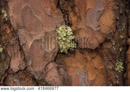 Green moss on a tree bark, Natural moss texture background