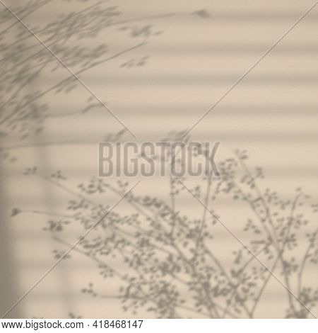 Background with floral branch and window shadow