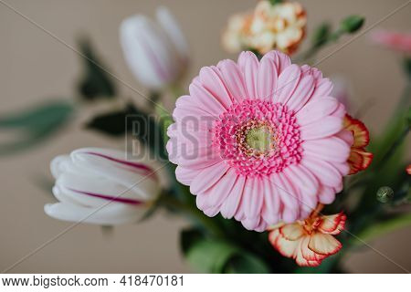 Pink Flower On A Wooden Background Beautiful Pink Daisy Flowers With White Background Natural Beauty