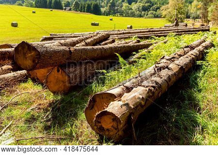Logs Of Wood Lays On Glade In Forest. Pile Of Wood Logs On The Edge Of The Forest. Logging Industry.