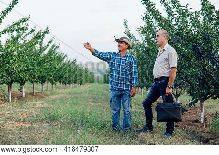 Successful Agribusiness, Senior Farmer Agronomist Standing In A Plum Orchard, Looking And Pointing A