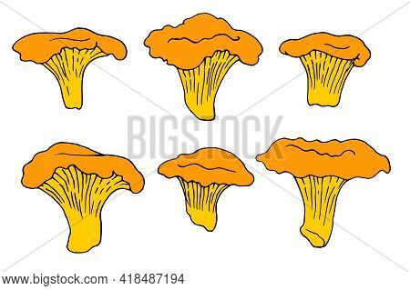 Yellow Mushrooms Chanterelles Pattern In Vintage Style On White Background. White Background.vector