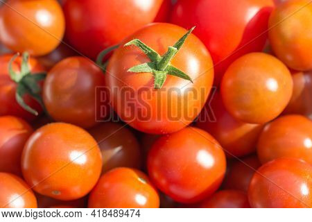 Bunch Of Tasty Juicy Fresh Red Bio Tomatoes From Above. Group Of Organic Nature Solanum Tomato Food
