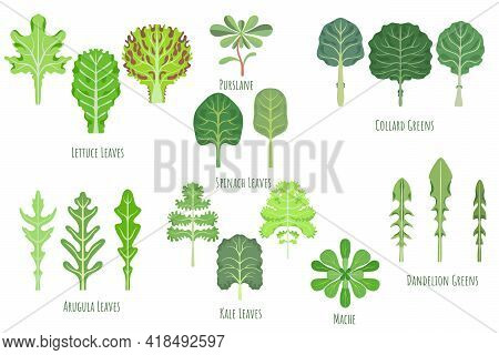 Big Set With Various Greens Made In Flat Style. No Outlined Symmetrical Leaf Shapes Filled With Colo
