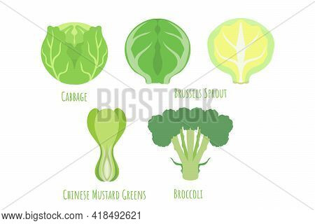 Common Cabbage, Chinese Mustard Greens, Brussels Sprout And Broccoli Isolated On White, Made In Flat
