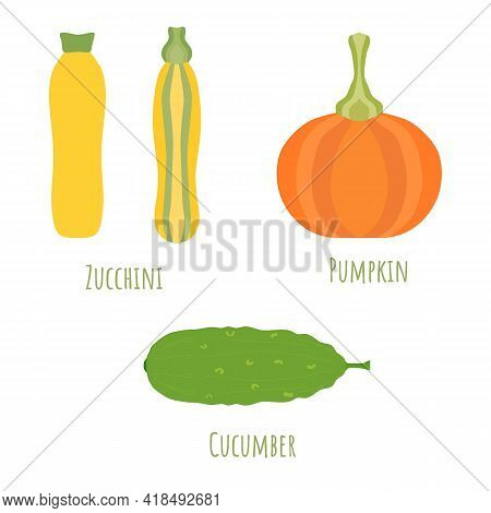 Yellow And Striped Zucchini, Pumpkin And Cucmber Isolated On White And Made In Flat Style. Symmetric