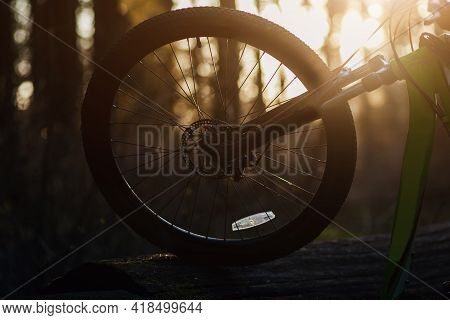 Bicycle Wheel At Sunset. Wheel With Spokes And Black Tire With Tread In Warm Sunny Weather