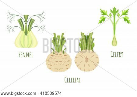 Whole And Halved Celeriac, Fennel And Celery Isolated On White, Made In Flat Style. Symmetrical Shap