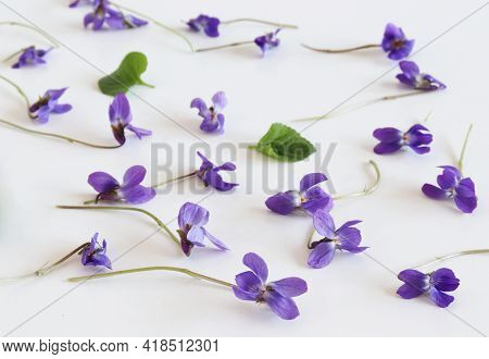 Pattern From Viola Odorata Flowers Isolated On Old White Background, Flat Lay, Top View. The Concept