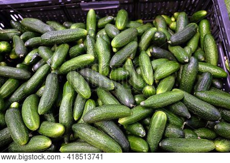 Still Life With Crop Of Many Ripe Green Cucumbers Inside Black Plastic Box In The Vegetable Departme