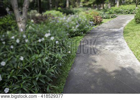 Summer Green Relaxation Of Outdoor Garden, Stock Photo