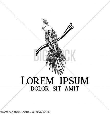 Parrot Design Logo Vector. Parrot Animal Vector