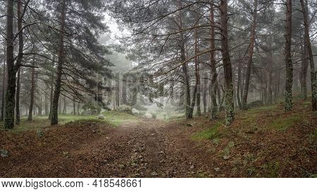 Panoramic Of Enchanted Forest With Stone Path That Leads To The Forest Clearing. Morcuera.