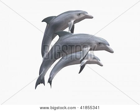 HI res Dolphins isolated on a white background