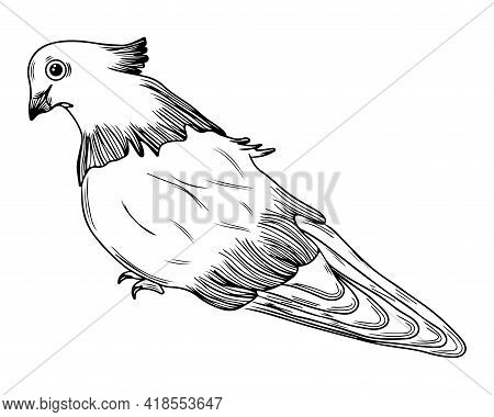 Line Pigeon Isolated On White Background. Pigeon For Coloring Book Or Page. Vector Pigeon.