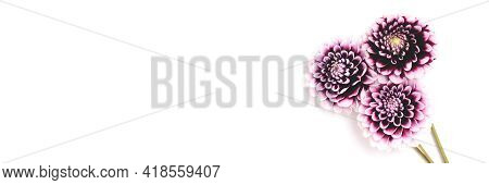Banner With Bouquet Of Dahlia Flowers On A White Background With Copyspace. Springtime Tenderness Co