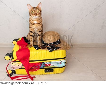 Bengal Cat Sits On A Yellow Suitcase Collected For A Vacation Trip