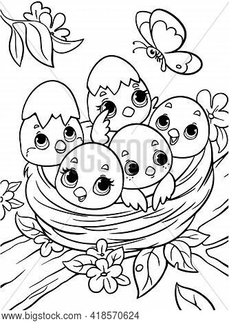 Chicks In The Nest Coloring Book For Kids. Black And White Outline. Children S Task Zoo. Animals Of