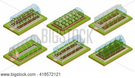 Isometric Greenhouse Isolated On White. Growing Seedlings In Glasshouse. Plants Crop In Greenhouse