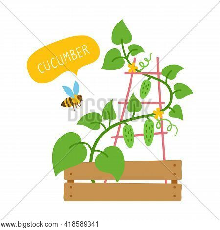 Cucumber Plant With Bee Flat Cartoon Card. Organic Vegetable With Speech Bubble, Green Shoots. Potte