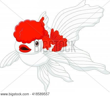 Vector Illustration Of Cartoon Oranda Goldfish On A White Background