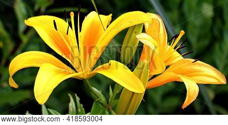 Beautiful yellow flower to use on screen background and presentations.