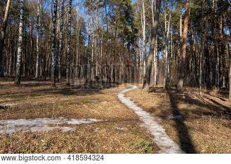 A Narrow Snow Trail Leading Into A High Mixed Forest On A Sunny Spring Day, Russia.
