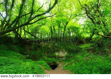 Very green forest growing on ancient underground stone quarry in Cenac, Gironde, France