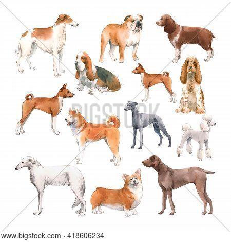 Beautiful Set With Cute Watercolor Hand Drawn Dog Breeds Cocker Spaniel Greyhound Hound Basenji And