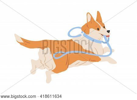 Cute Welsh Corgi Dog Running Away With Leash In Mouth. Happy Funny Doggy Escaping. Colored Flat Vect
