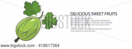 Sweet Green Berry Gooseberry Banner , Fruit Isolated On White Background, Vector Illustration