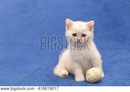 White kitten playing with a ball
