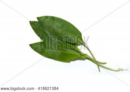 Fresh Wild Garlic Leaves. Fresh Leaves Of Wild Leek Isolated On White Background. Useful Properties