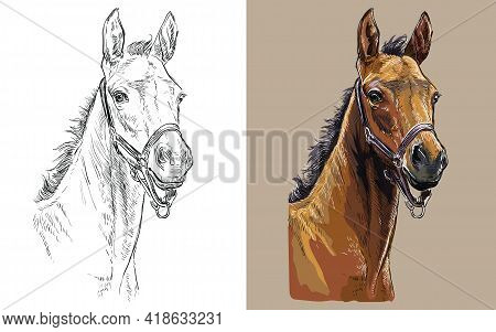 Realistic Head Of Colt In The Halter. Vector Black And White And Colorful Isolated Illustration Of H